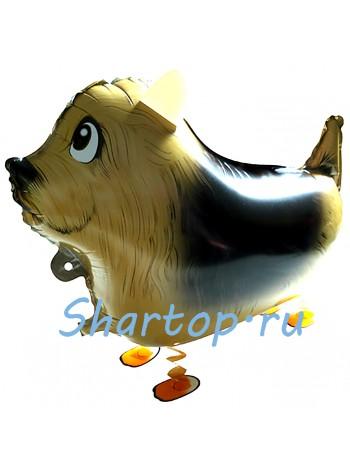 Ходячий шар, собака Фокстерьер  61 см